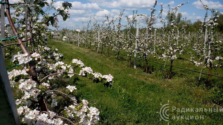 Бизнес, сельское хозяйство, с 2011